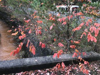 秋の便り(*^_^*)